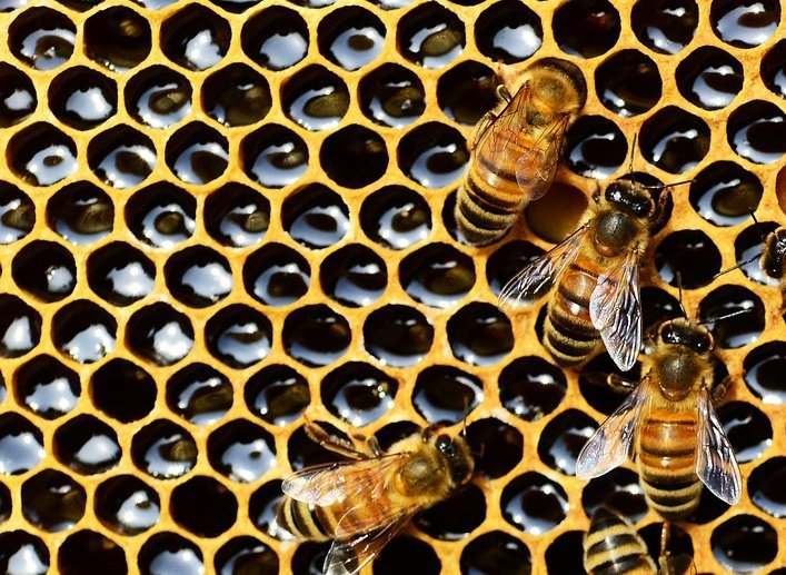bees microservices-1.jpg